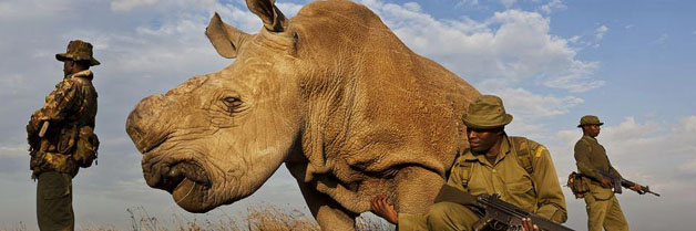 The last chance to avoid extinction