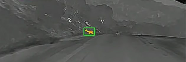 What to look for in an infrared deer detector for cars?